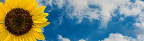 Zonnebloembloem tegen de hemel met wolken Stock Afbeelding