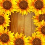 Zonnebloembloemen in een cirkel op een houten achtergrond worden geschikt die Royalty-vrije Stock Afbeelding