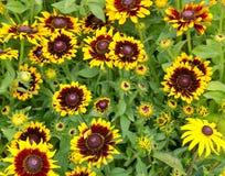 Zonnebloemen bij de markt van de landbouwer Royalty-vrije Stock Foto