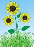 Zonnebloemen in de blauwe hemel vector illustratie