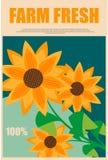 Zonnebloemen in de reclame van verse landbouwproducten Royalty-vrije Stock Afbeeldingen