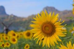 Zonnebloemen in de tuin Stock Afbeeldingen