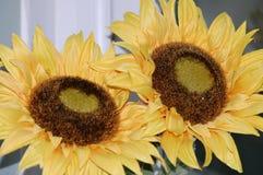 Zonnebloemen die nooit sterven Royalty-vrije Stock Foto