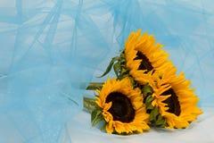 Zonnebloemen in een blauwe klatergoudsluier Royalty-vrije Stock Foto