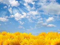 Zonnebloemen en blauwe hemel stock fotografie