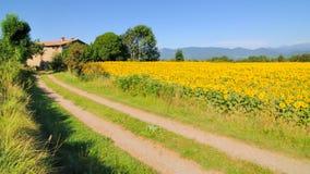 Zonnebloemen en boerderij no.1 Stock Afbeeldingen