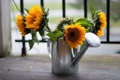 Zonnebloemen en gieter Royalty-vrije Stock Foto