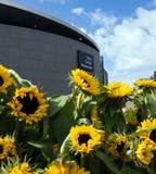 Zonnebloemen en Van Gogh-museum Stock Fotografie