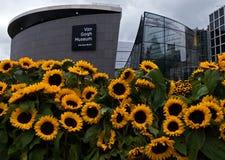 Zonnebloemen en Van Gogh-museum Stock Foto's