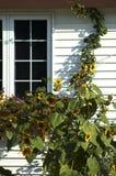 Zonnebloemen en venster Royalty-vrije Stock Foto's
