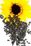 Zonnebloemen en zonnebloemzaden op een witte achtergrond Stock Afbeeldingen