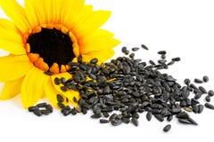 Zonnebloemen en zonnebloemzaden op een witte achtergrond Royalty-vrije Stock Fotografie