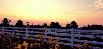 Zonnebloemen en zonsopgang stock foto's