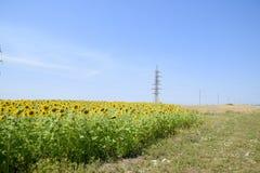Zonnebloemen in Frankrijk Bloeiende zonnebloemen op het gebied Zonnebloemgebied op een zonnige dag Royalty-vrije Stock Foto's