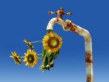 zonnebloemen het weggaan Royalty-vrije Stock Afbeelding