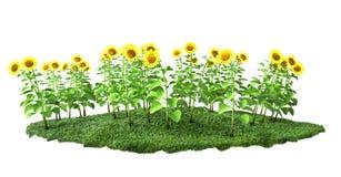 Zonnebloemen met gras 3D illustratie stock illustratie