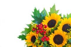 Zonnebloemen met groene bladeren Stock Foto's