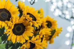 Zonnebloemen met vage neonachtergrond op de partijnacht stock afbeelding