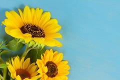 Zonnebloemen op blauw Royalty-vrije Stock Fotografie