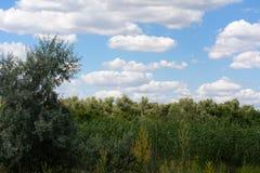 Zonnebloemen op het gebied stock foto