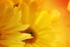 Zonnebloemen over zonsondergang Royalty-vrije Stock Foto's