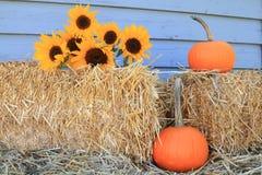 Zonnebloemen, pompoenen en hooi voor Dankzegging Royalty-vrije Stock Fotografie