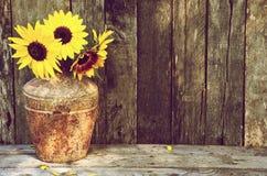 Zonnebloemen stilllife. Royalty-vrije Stock Afbeeldingen
