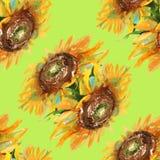 Zonnebloemenachtergrond watercolor Royalty-vrije Stock Foto