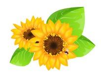 Zonnebloemendecoratie met lieveheersbeestjes royalty-vrije illustratie
