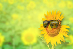 Zonnebloemenglazen op achtergrond Stock Afbeelding