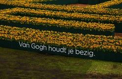 Zonnebloemenlabyrint Royalty-vrije Stock Afbeeldingen