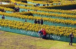 Zonnebloemenlabyrint Stock Foto's