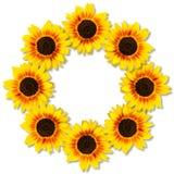 Zonnebloemenvorm om kader Bloemen frame Spot omhoog of malplaatje Vlak leg, hoogste mening stock foto's