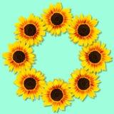 Zonnebloemenvorm om kader Bloemen frame Spot omhoog of malplaatje Vlak leg, hoogste mening stock afbeeldingen