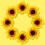 Zonnebloemenvorm om kader Bloemen frame Spot omhoog of malplaatje Vlak leg, hoogste mening royalty-vrije stock foto