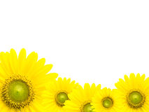 Zonnebloemkader Stock Afbeelding