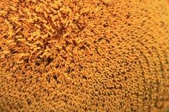 Zonnebloemstuifmeel op stamens voor dichte omhooggaand als achtergrond Stock Foto's