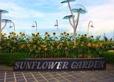 Zonnebloemtuin bij Changi luchthaven Stock Foto's