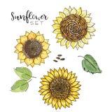 Zonnebloemzaad, reeks van de bloem de vectortekening Handdrawn geïsoleerde illustratie Voedselingrediënt voor olie verpakkingsont royalty-vrije illustratie