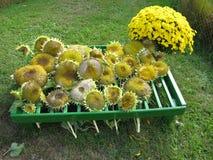 Zonnebloemzaden iedereen? Stock Foto