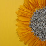 Zonnebloemzaden op gele achtergrond royalty-vrije stock foto