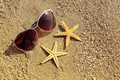 Zonnebril met zeesterren Stock Foto