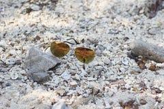 Zonnebril op het strand Royalty-vrije Stock Foto's
