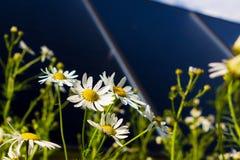 Zonnecollectoren en bloemen stock afbeeldingen