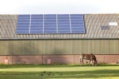 Zonnepanelen en weidend paard Stock Foto's