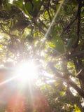 zonneschijn Royalty-vrije Stock Fotografie