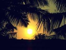 zonneschijn Stock Afbeeldingen