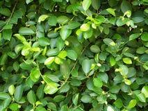 Zonneschijn bij Groene struik Royalty-vrije Stock Afbeeldingen