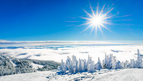 Zonneschijn, blauwe hemel en sneeuw behandelde bomen Royalty-vrije Stock Foto's