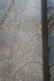 Zonneschijn in bos Royalty-vrije Stock Afbeelding